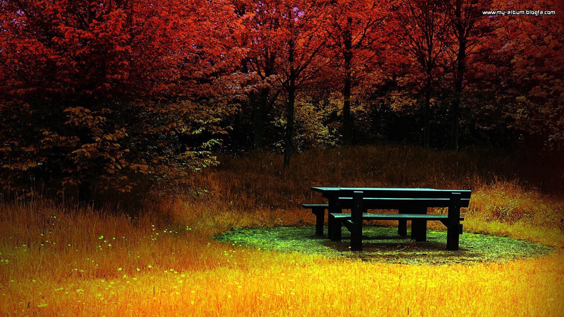 Park Autumn Bench Fall Tree Photography 1920x1080